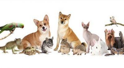 CBD per tutti gli animali