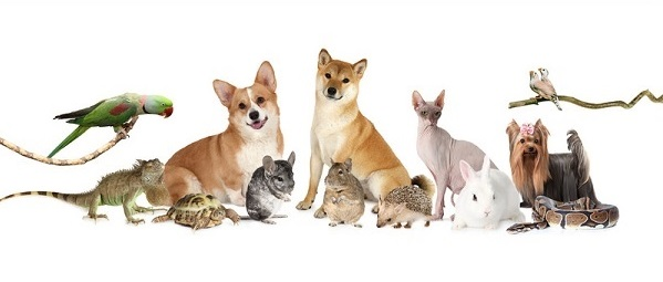 CBD For All Animals